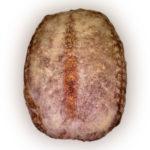 хлеб-Зерновой